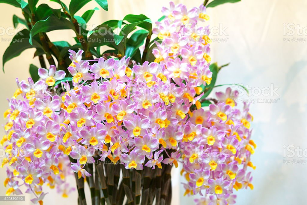 Orchid of the world stock photo