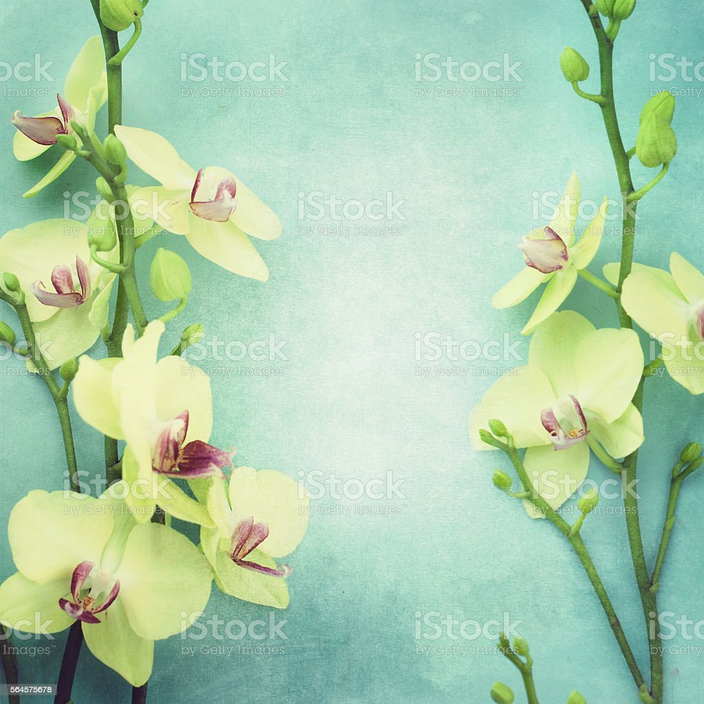 Orchid on a wooden background. stock photo
