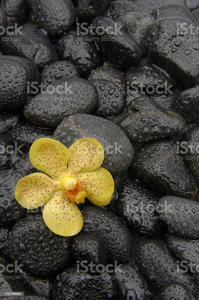 Orchid on Black Pebbles royalty-free stock photo