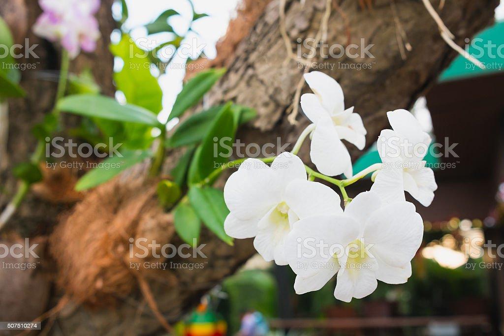 Orchidee auf Baum. Symbol für Eleganz. Lizenzfreies stock-foto