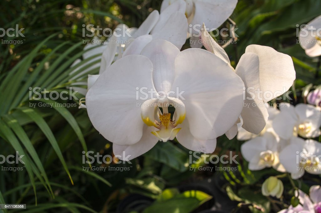 Orchid park stock photo