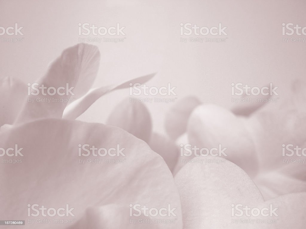 orchid petals royalty-free stock photo