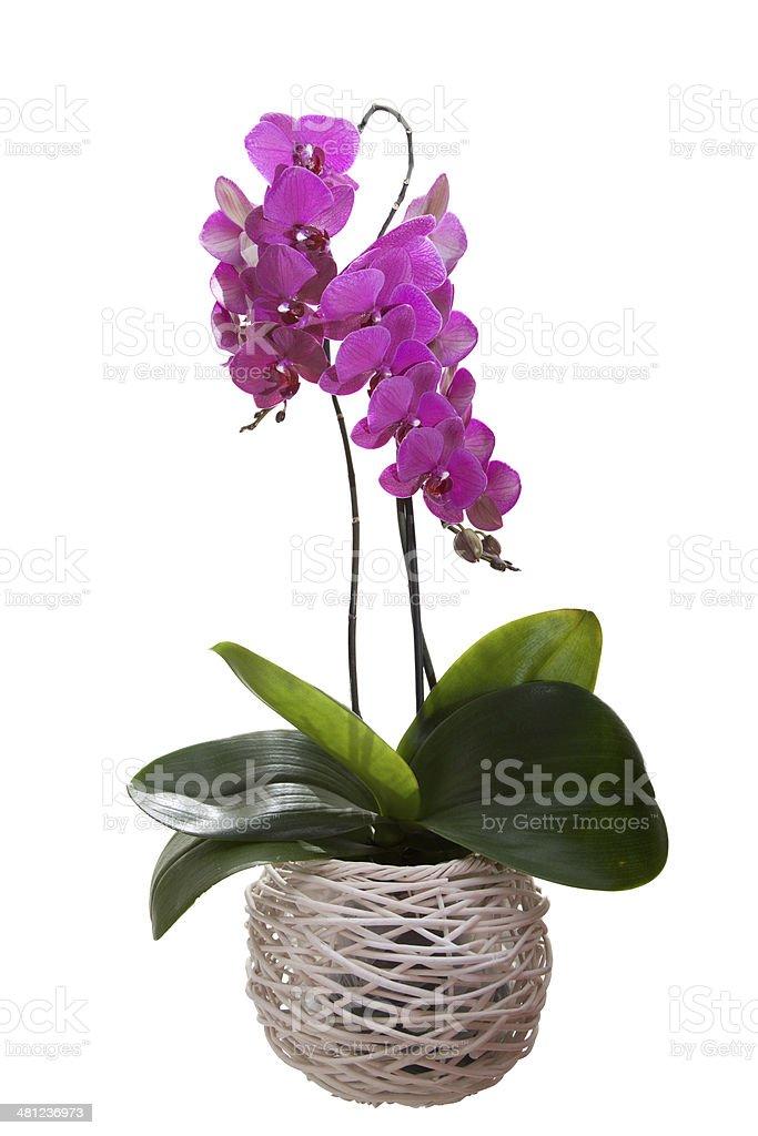 Орхидея Стоковые фото Стоковая фотография