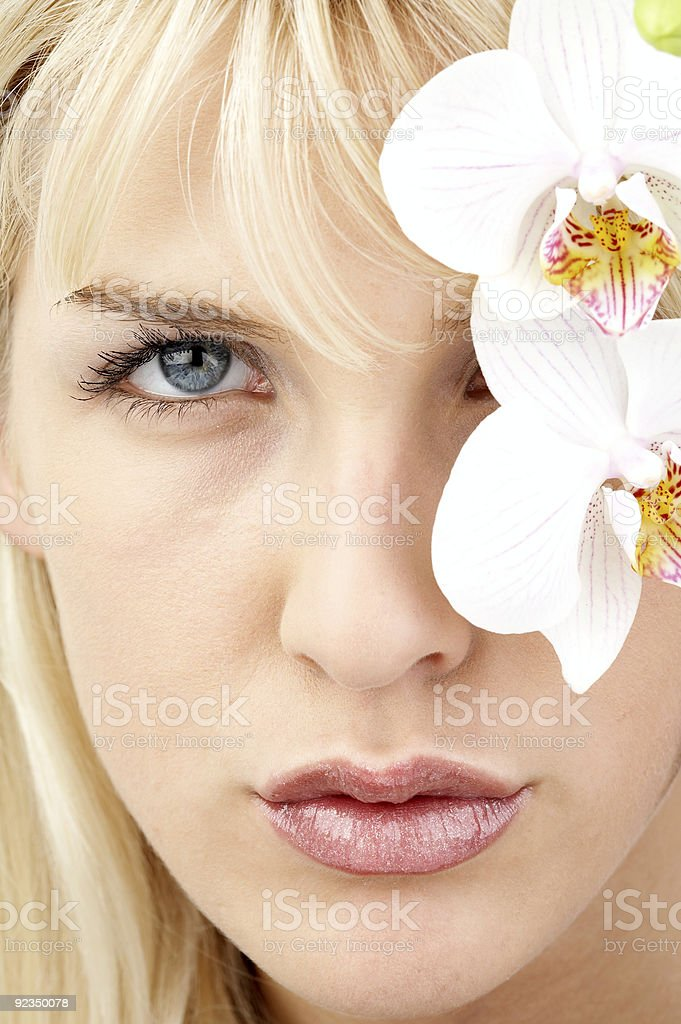 Orchid portrait stock photo