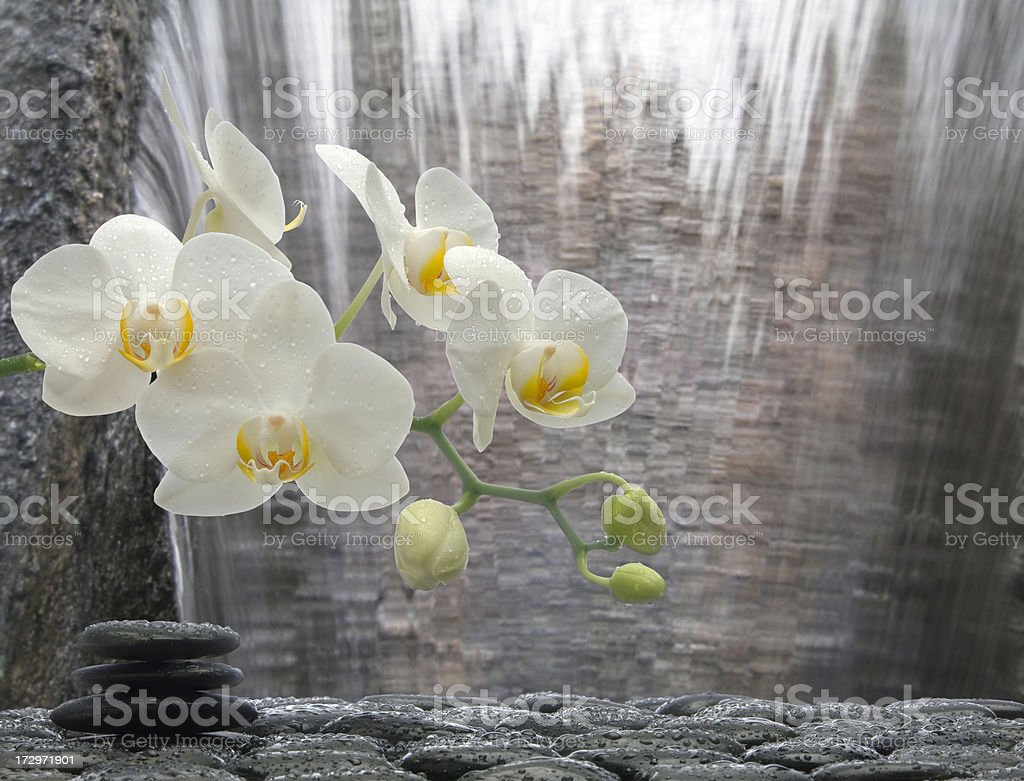 Orchid Waterfall stock photo