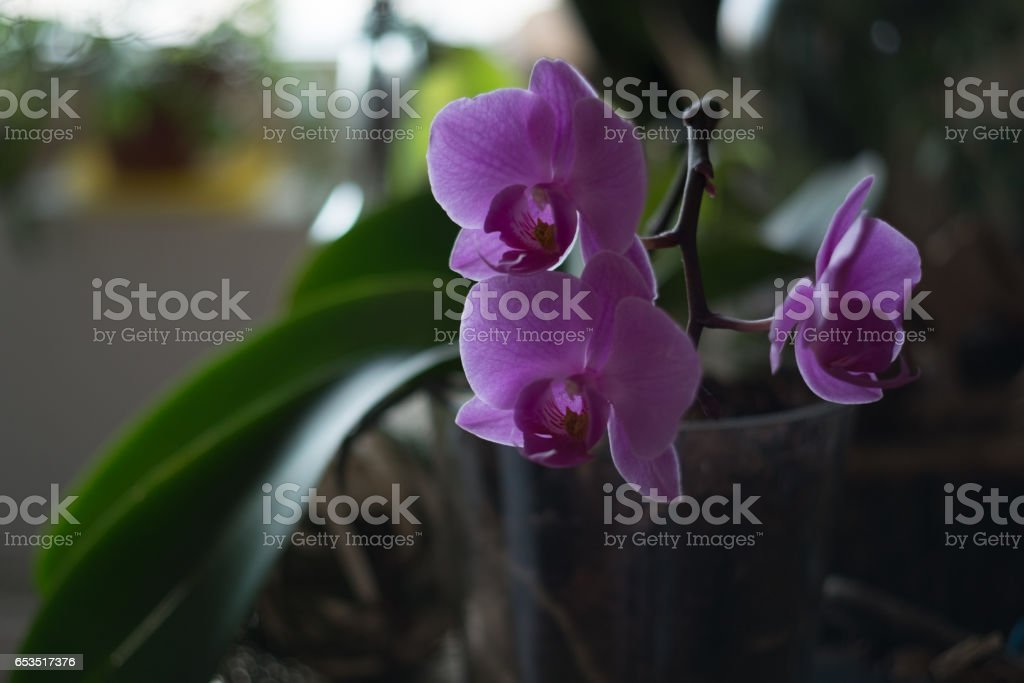 Orchid with nice background stock photo