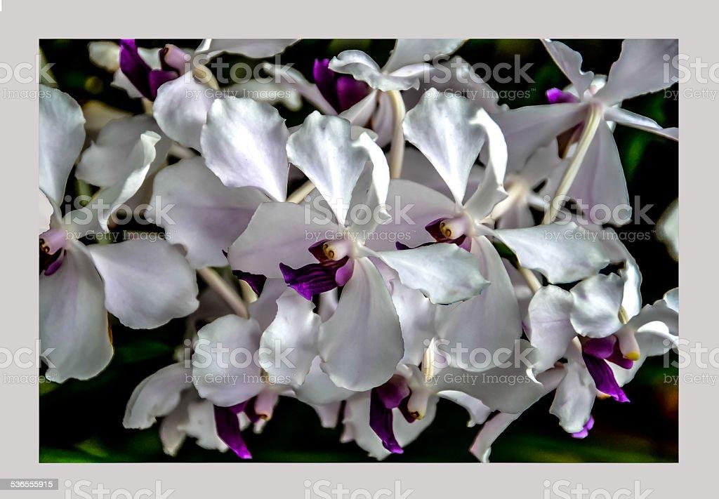 Orchideen-Foto-Gemälde stock photo