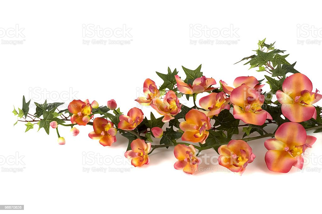 Orchids and Ivy royalty-free stock photo
