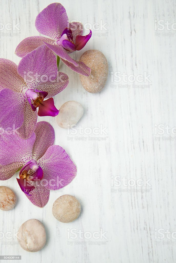 Orchids and massage stones stock photo