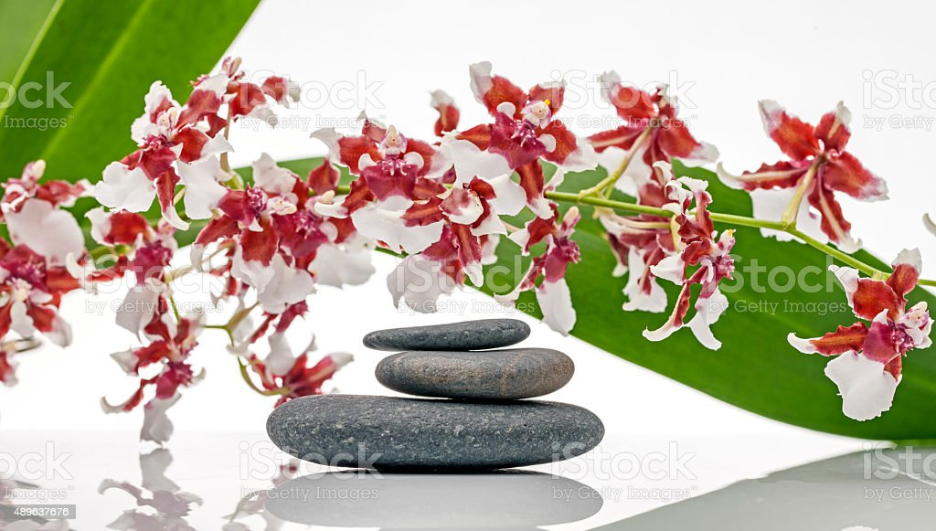 Orchids and Pebbles at Health Spa stock photo