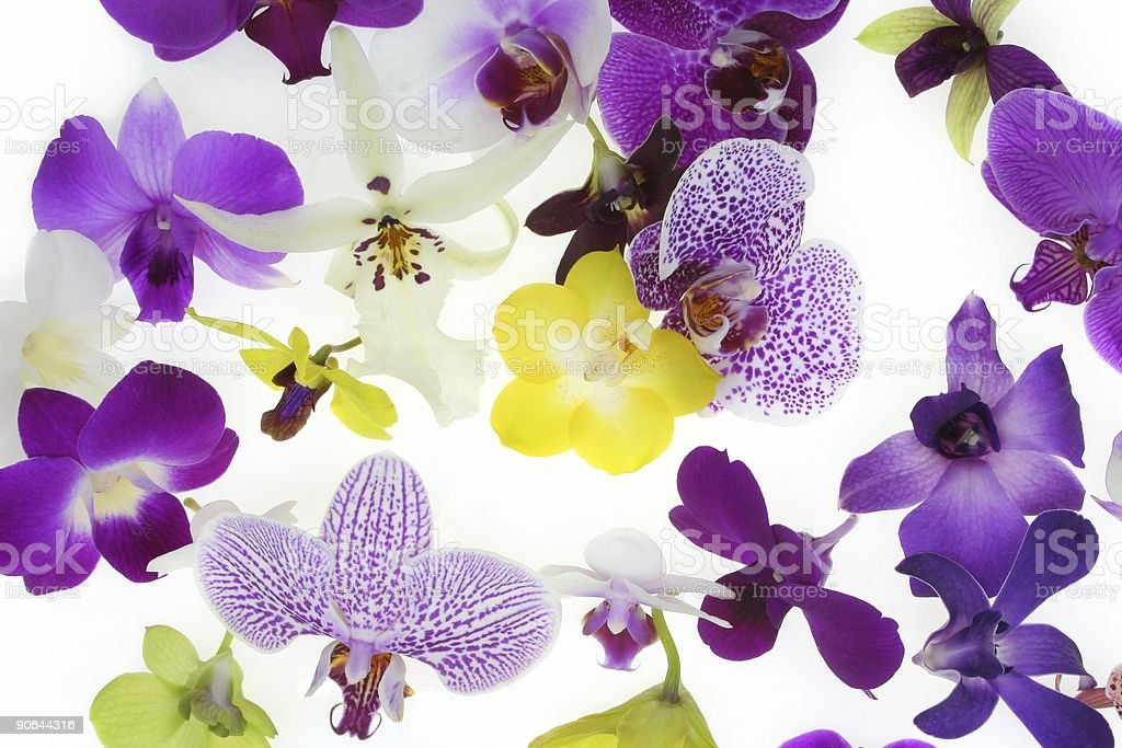 Orchids Background #2 royalty-free stock photo