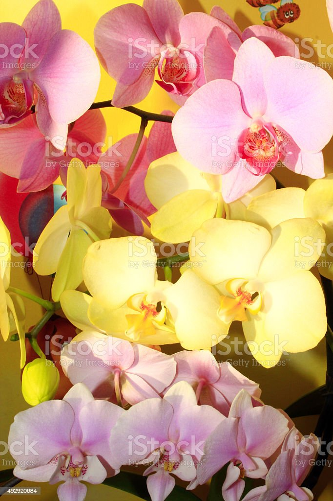 orchids different colors stock photo