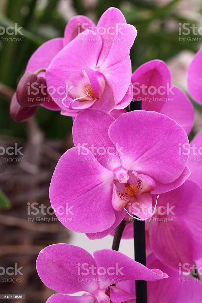 Orchids flowers stock photo