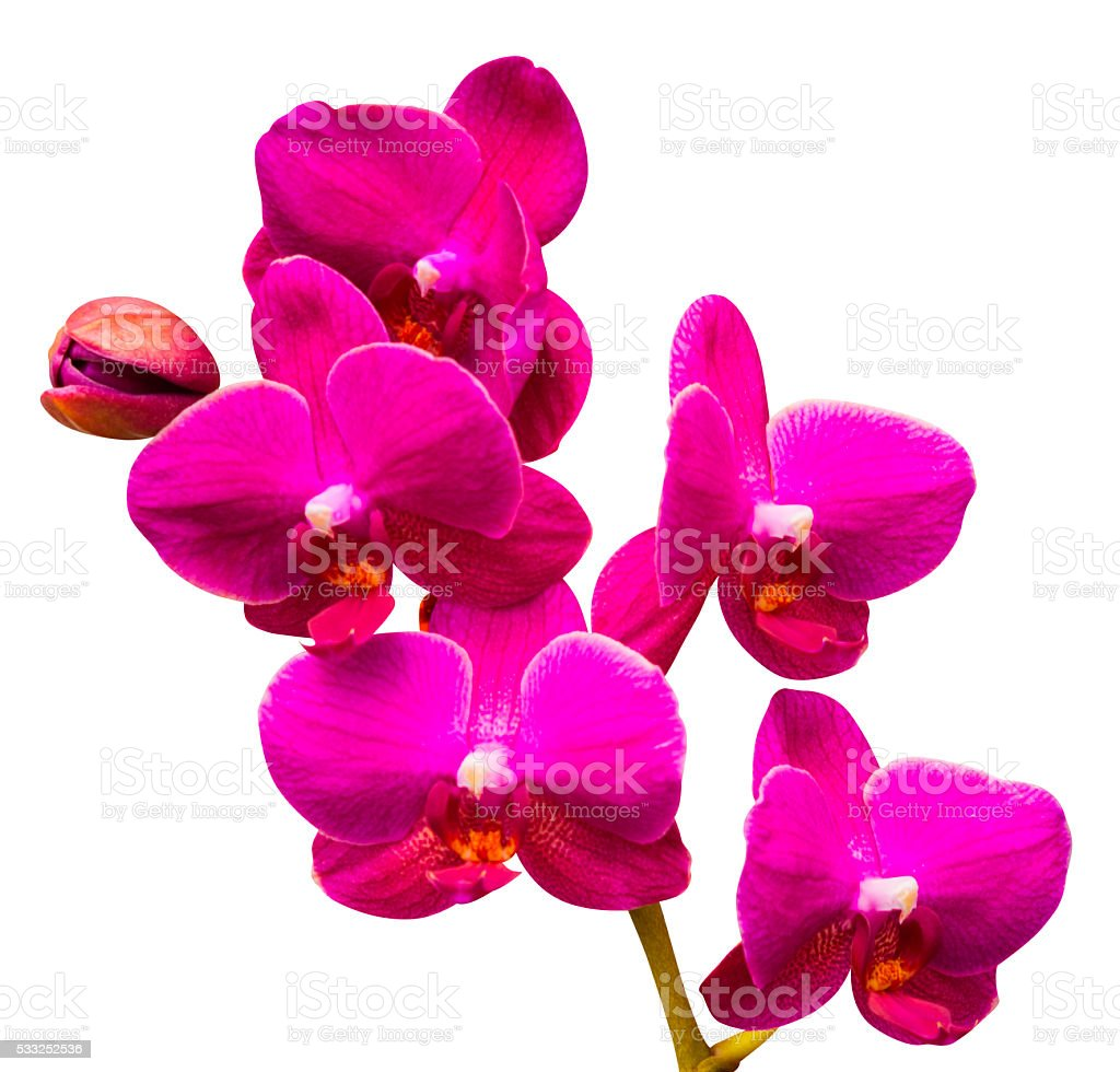 Orchids. Orchid flowers. stock photo