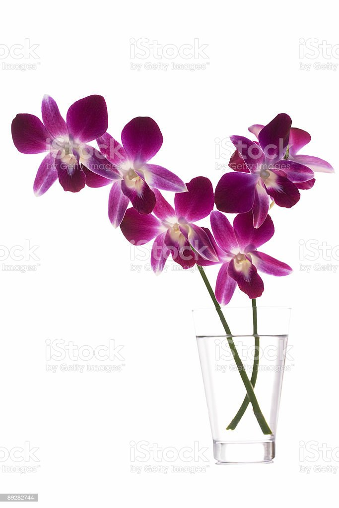 Orchids royalty-free stock photo