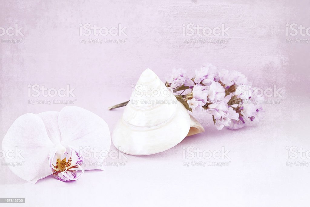 Orchid,shell and flowers, stock photo