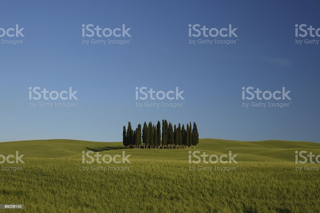Orcia Little Cypress Forest Spring royalty-free stock photo