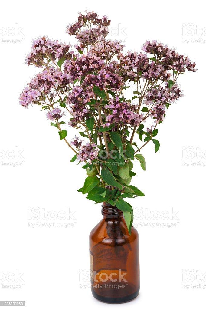 Oregano flowers with pharmaceutical bottle stock photo