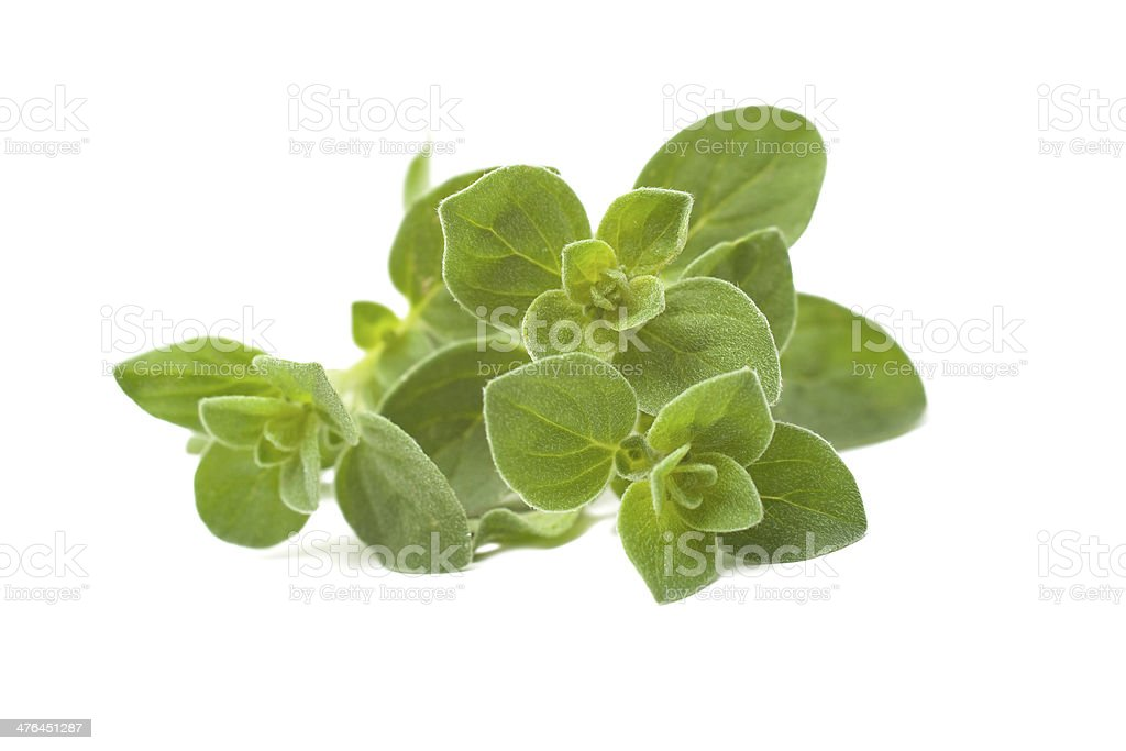 Oregano stock photo