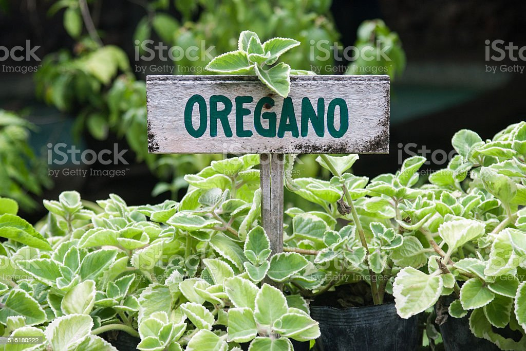Oregano sign stock photo