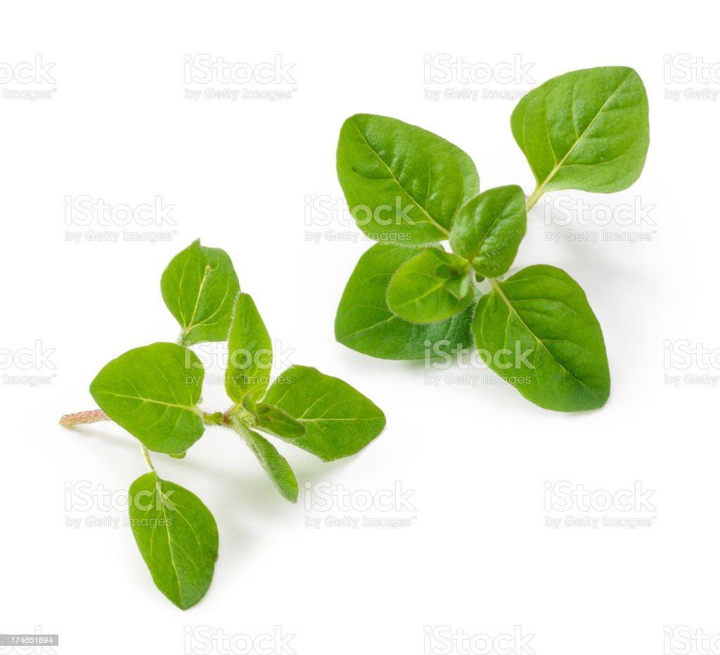 Oregano Twigs stock photo
