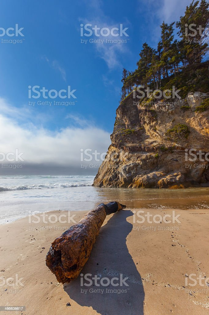 Oregon Beach Driftwood. royalty-free stock photo