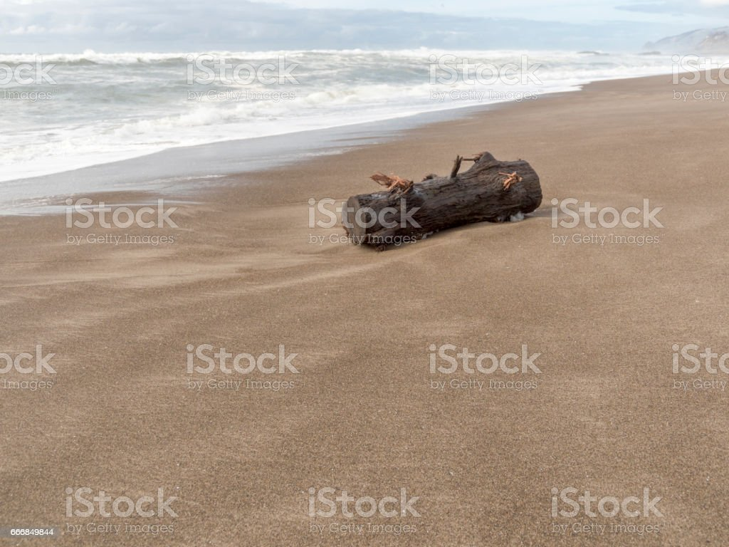 Oregon Coast Beach with Tree Log Dangerous in Surf stock photo