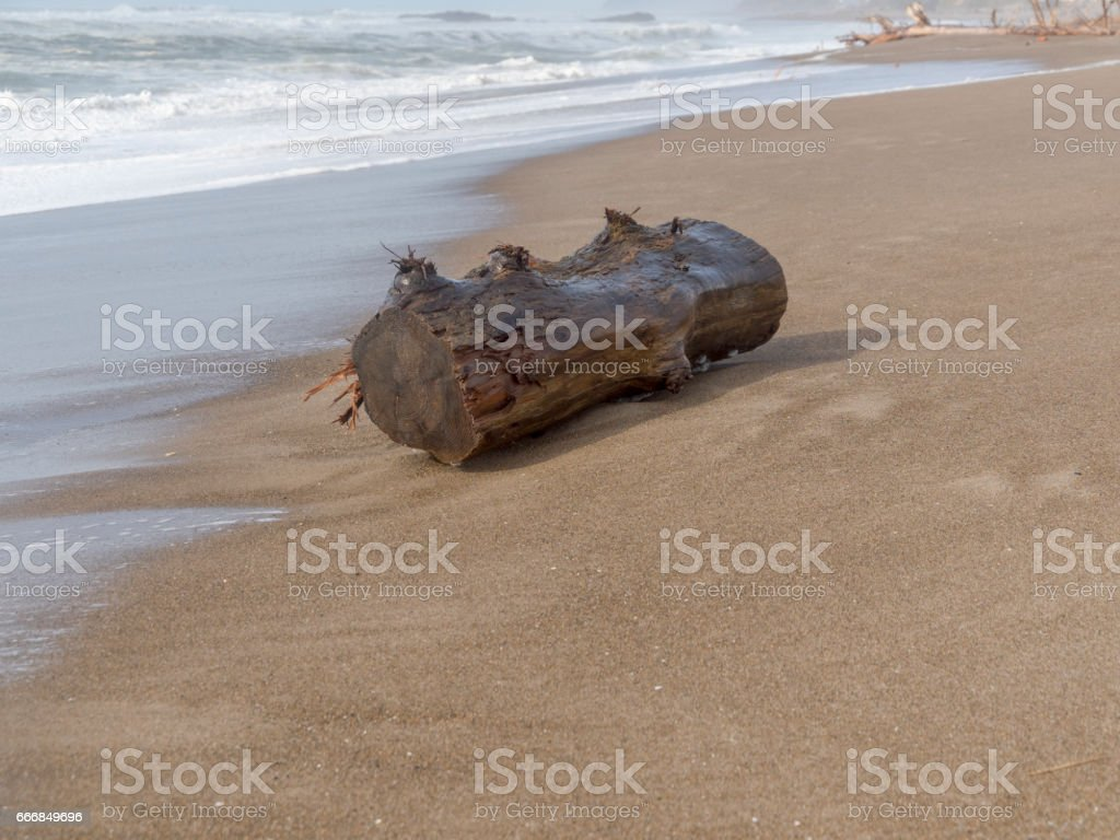 Oregon Coast Beach with Tree Log Dangerous in Waves stock photo