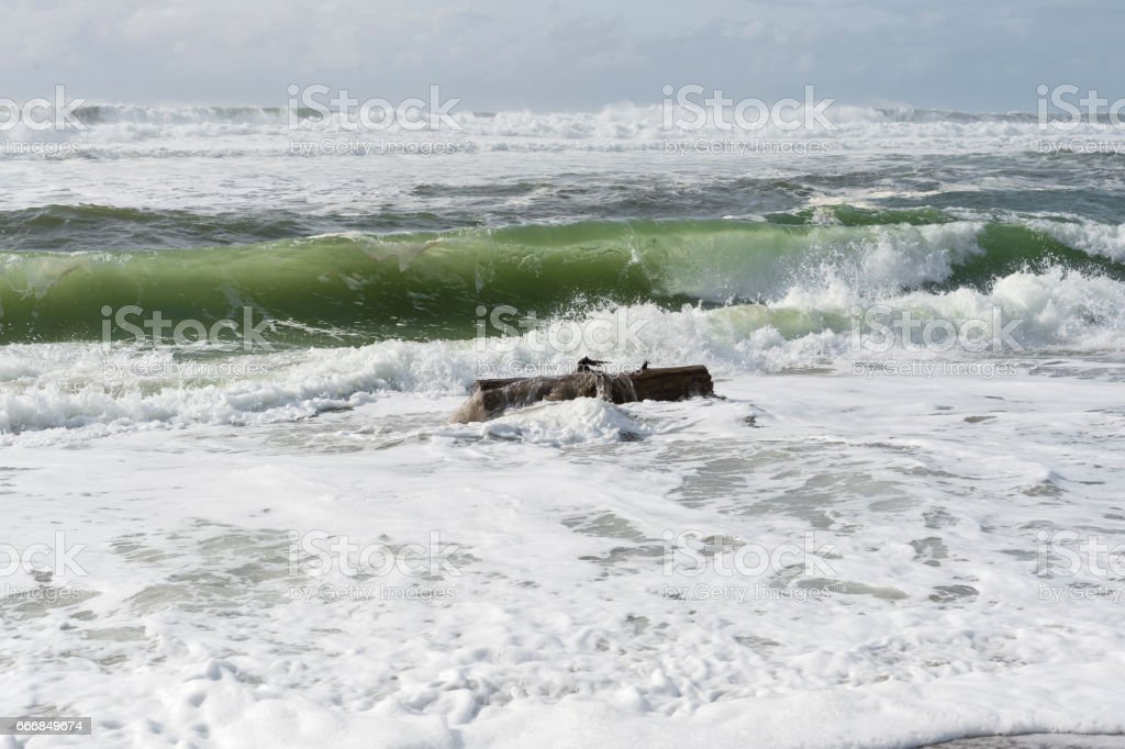Oregon Coast Beach with Tree Log Floating in Water Dangerous stock photo