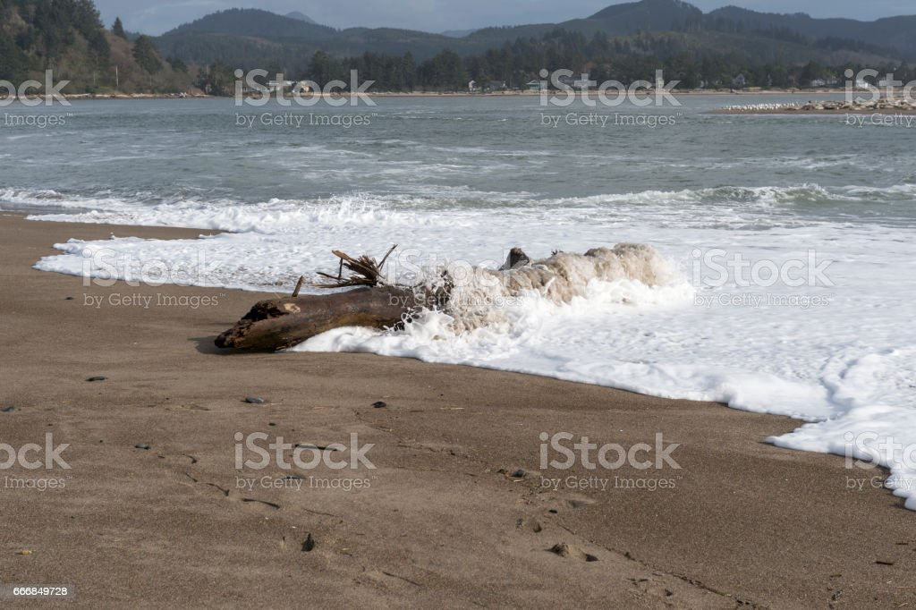 Oregon Coast Beach with Tree Log Hit by Waves Dangerous stock photo