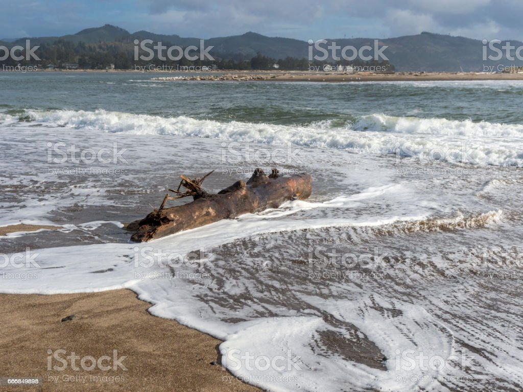 Oregon Coast Beach with Tree Log in Surf Dangerous stock photo