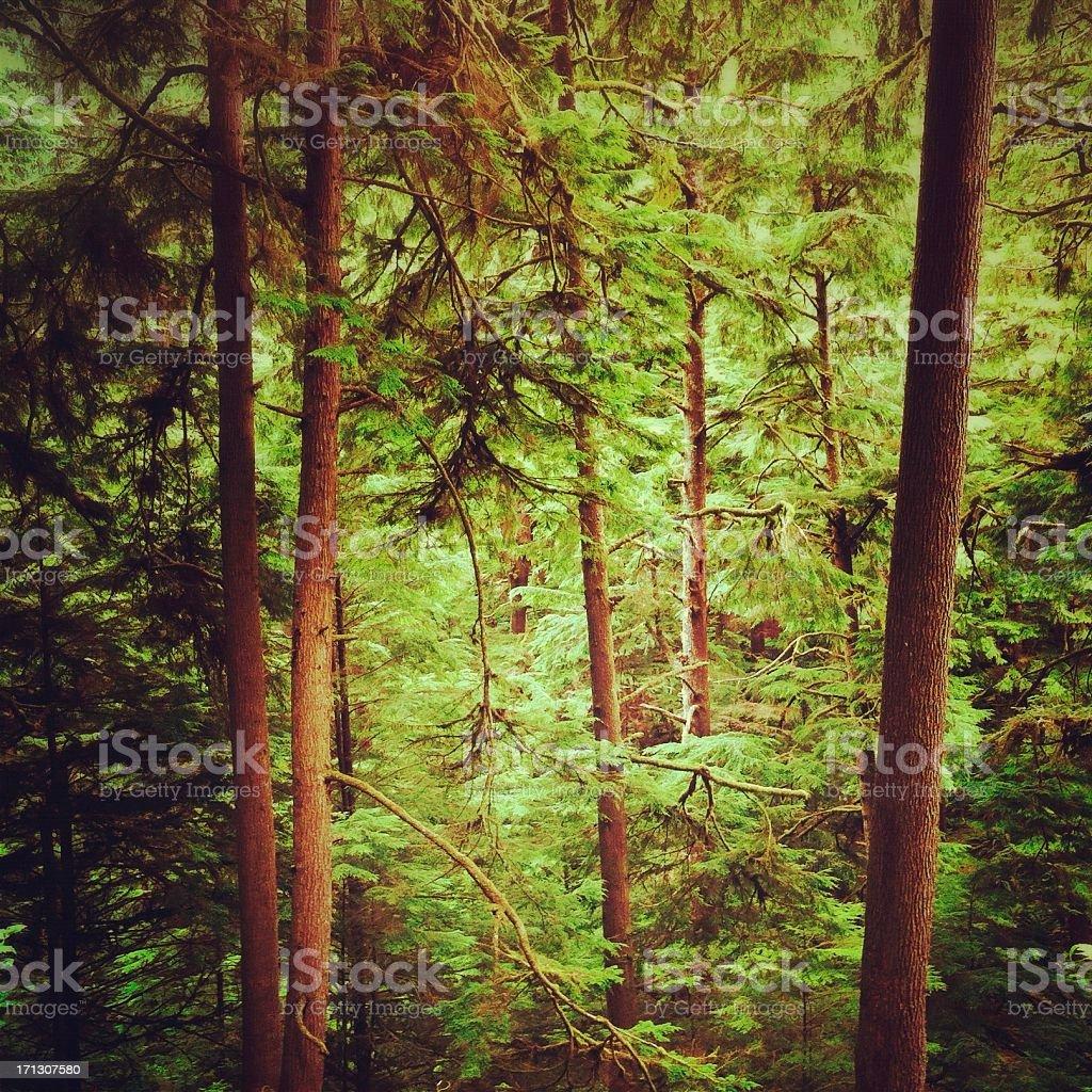 Oregon coast forest stock photo