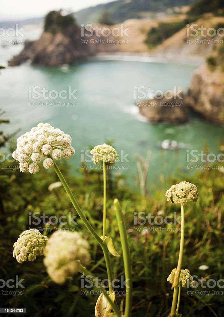 Oregon coast overlook royalty-free stock photo