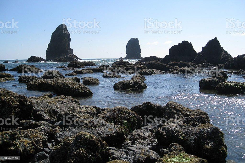 Oregon Coast Tidepool stock photo