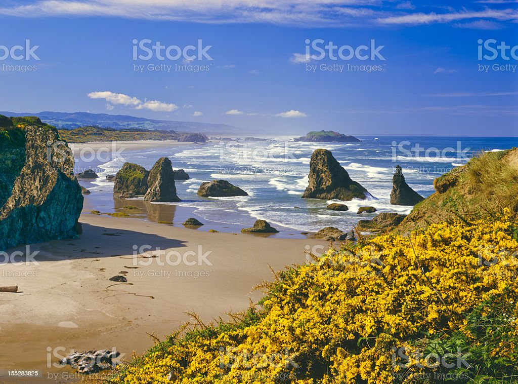 Oregon Coastline stock photo