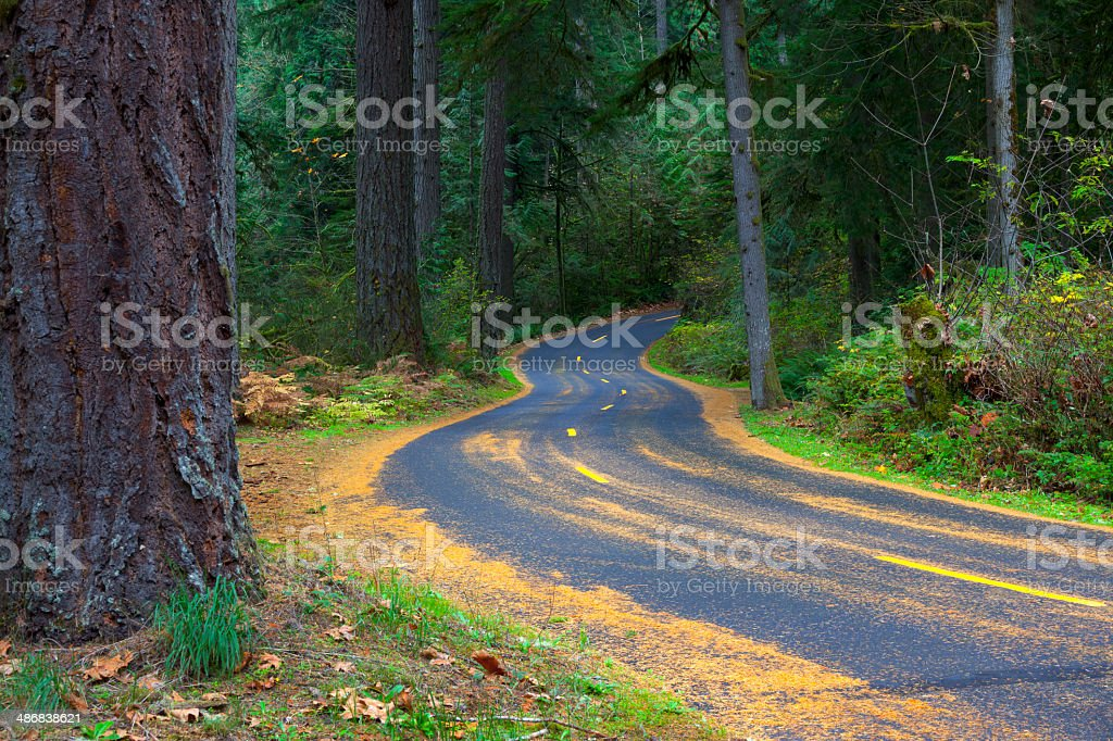 Oregon Forest Road. royalty-free stock photo