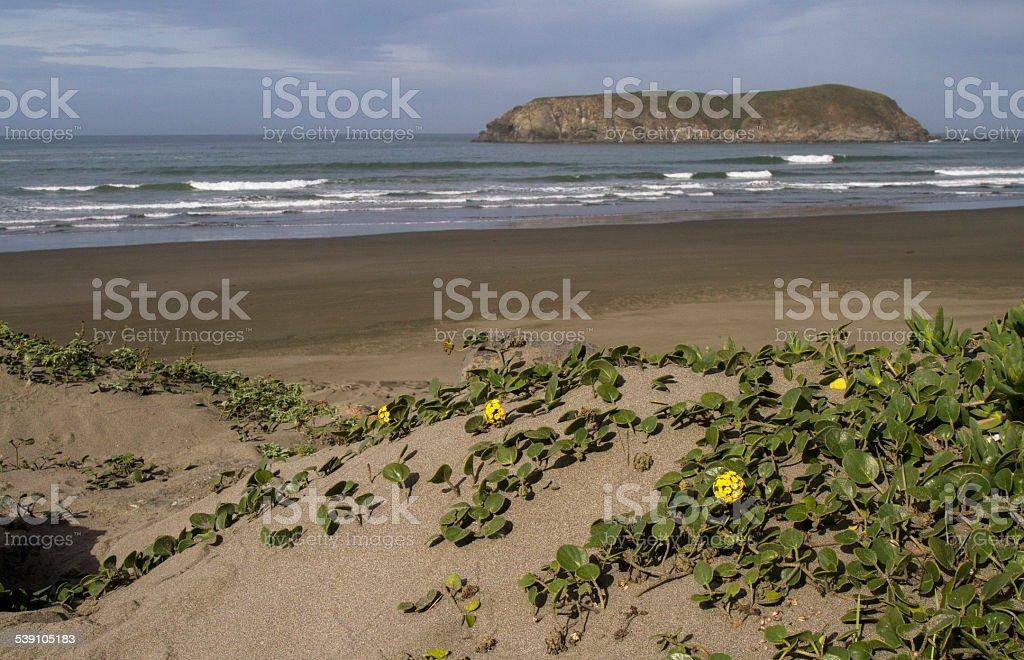 Oregon Ocean Beach stock photo