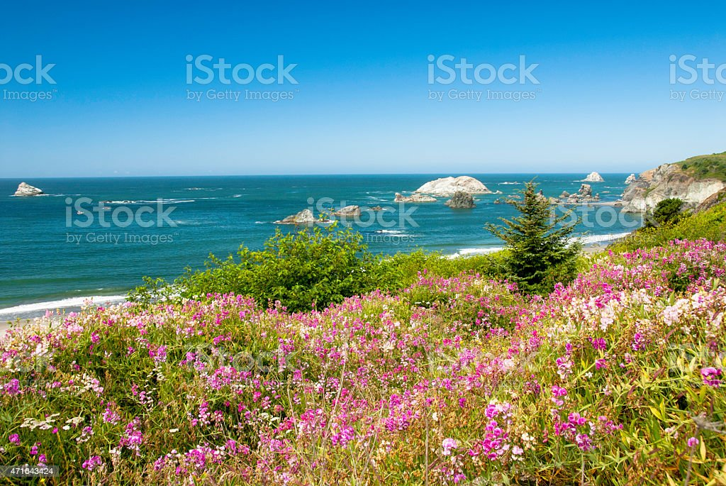 Oregon Ocean View  with Flowers stock photo
