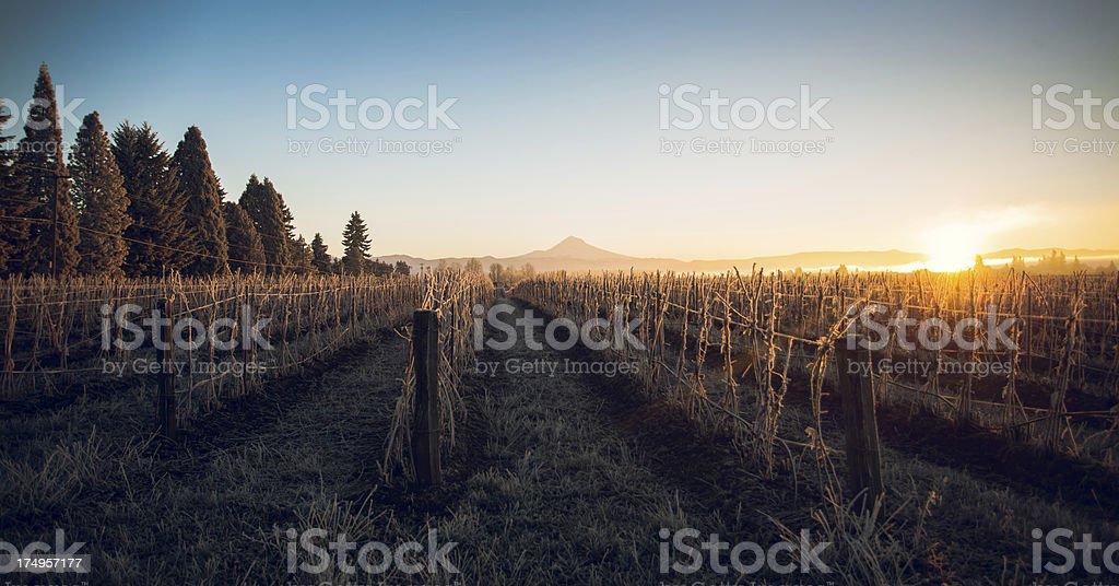 Oregon Sunrise Over Mount Hood and Frozen Wintery Landscape royalty-free stock photo