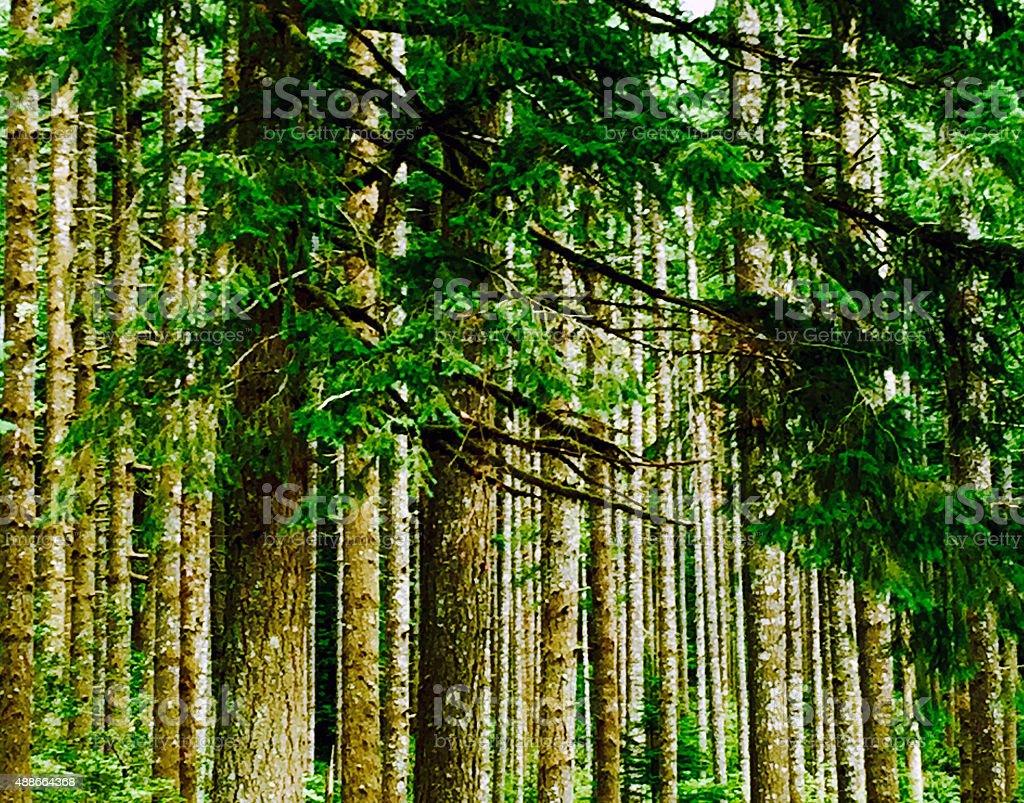 Oregon trees royalty-free stock photo