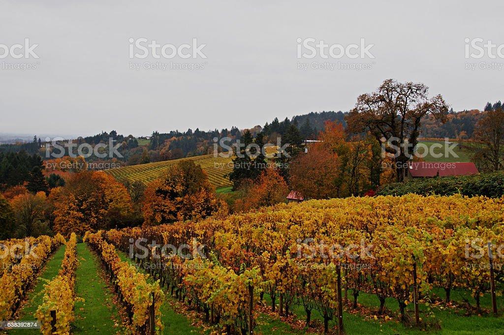 Oregon Wine Country in Autumn stock photo