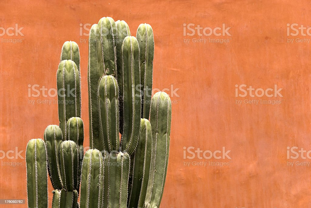 Organ pipe cactus against a red wall royalty-free stock photo