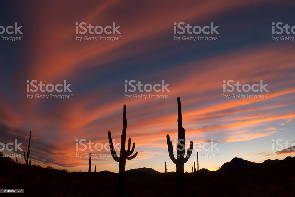Organ Pipe Cactus National Monument, AZ stock photo