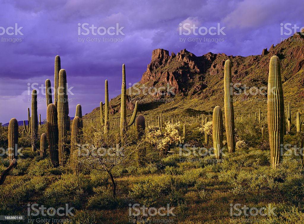 Organ Pipe Cactus National Monument stock photo