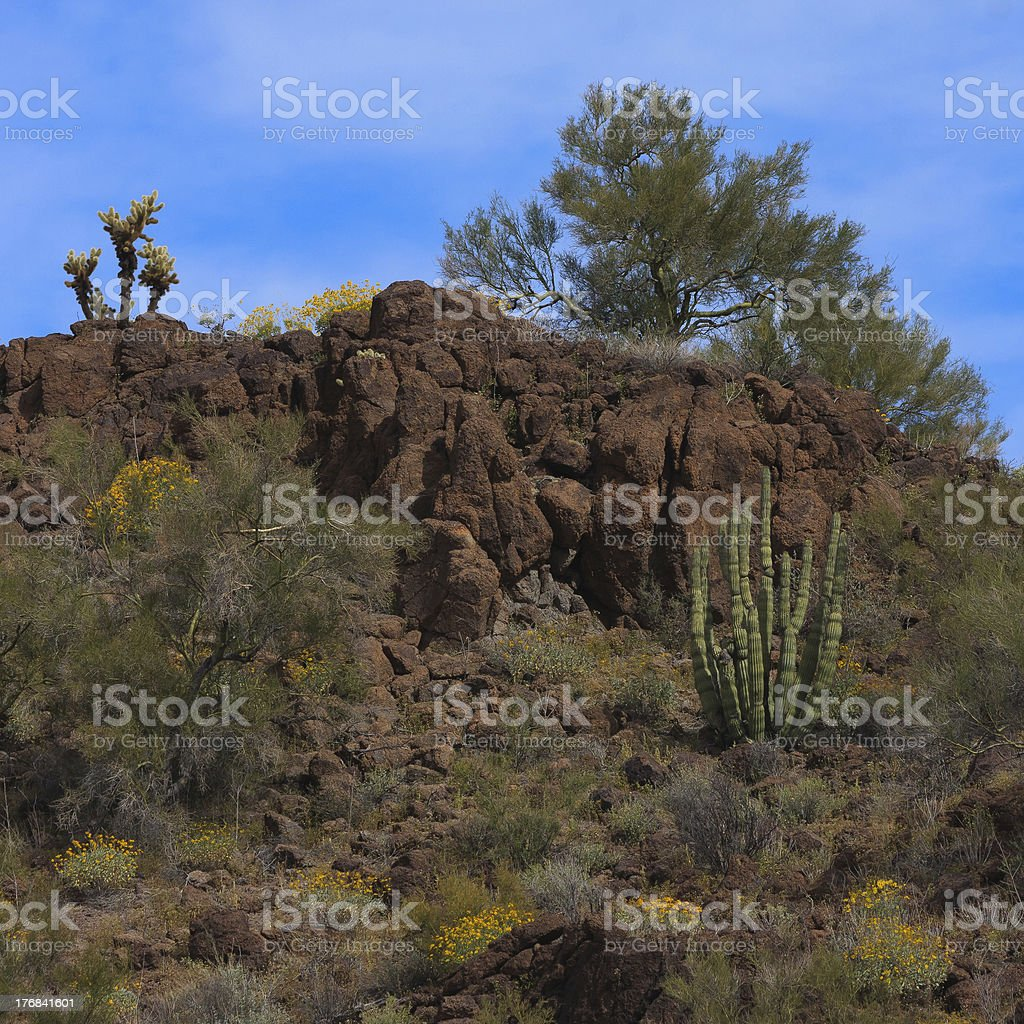 Organ Pipe Spring royalty-free stock photo