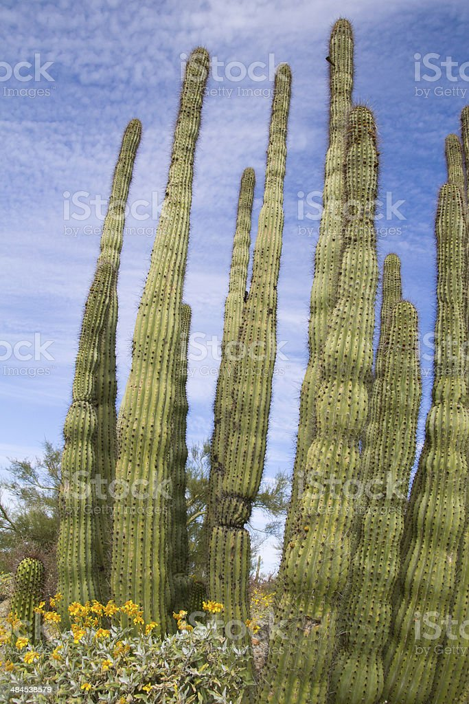 Organ Pipe with Bloms royalty-free stock photo