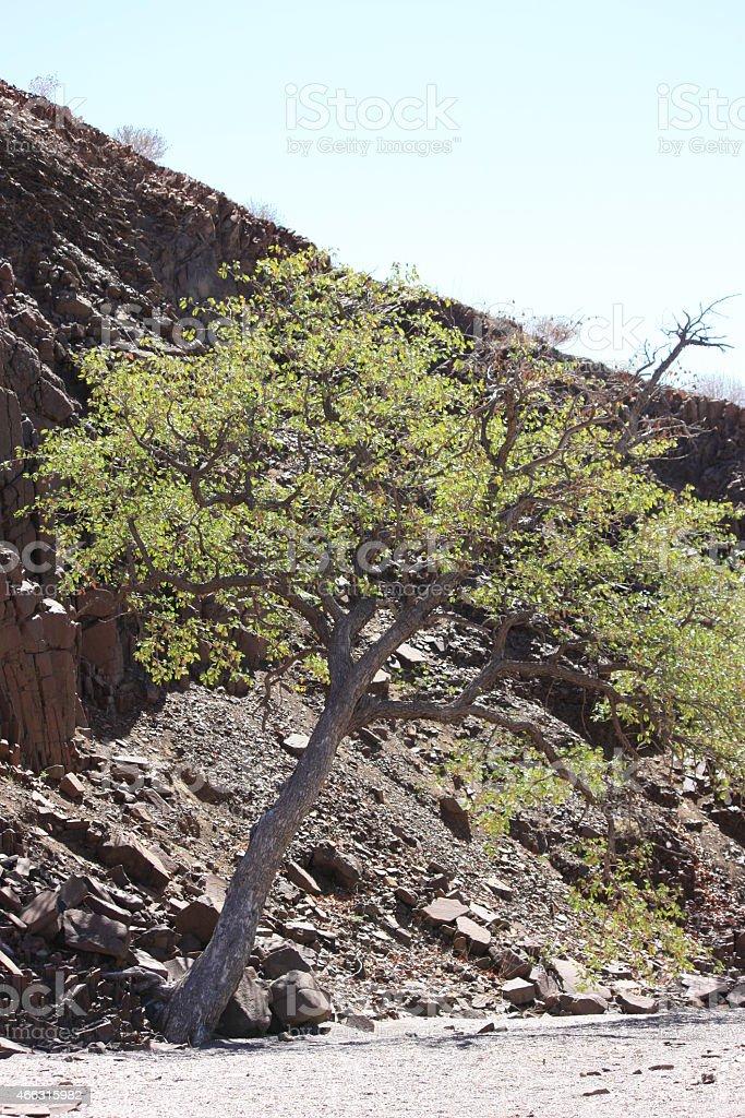 Organ pipes close to Burnt Mountain west of Khorixas, Namibia stock photo