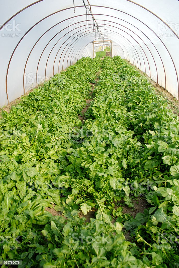 Organic Biofarm Hothouse stock photo