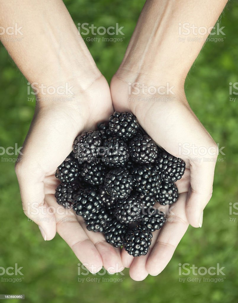 Organic Blackberries - Grown in the Wild (XXXL) royalty-free stock photo