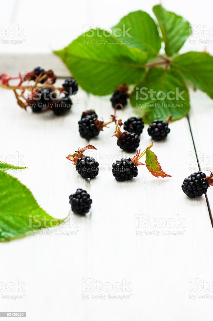 Bio de blackberry photo libre de droits